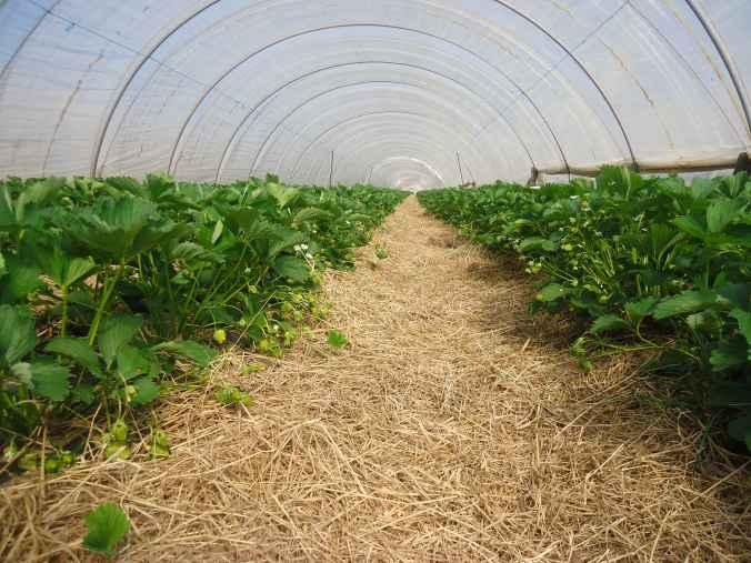 tunnel-fraisier